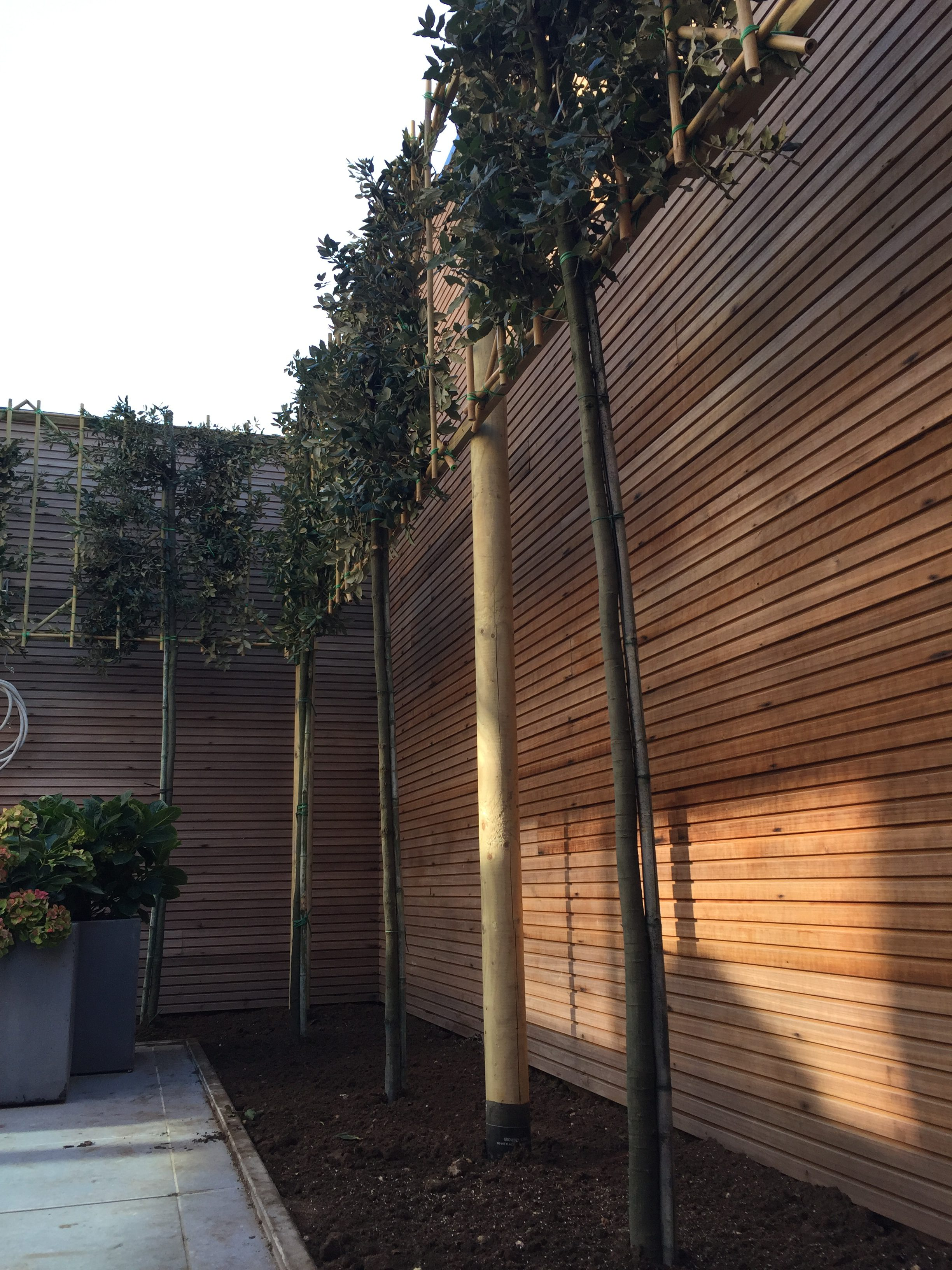 Uitgelezene PRIVACY SCREENS (wintergroene) leischermen - Privacy Trees CU-03